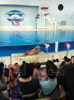 水族館 イルカショーの写真・画像素材[773784]