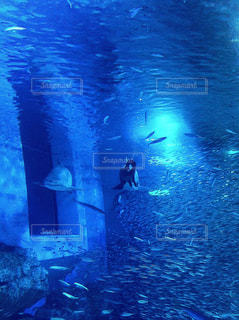 水族館 魚の写真・画像素材[773787]