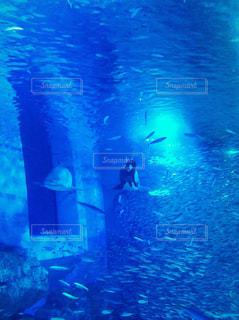 水族館 魚の写真・画像素材[773791]