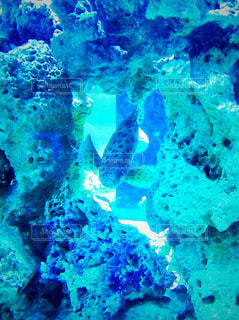 水族館の魚の写真・画像素材[775369]