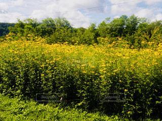 北海道 夕張 幸福の黄色いハンカチ想い出ひろばの写真・画像素材[800923]