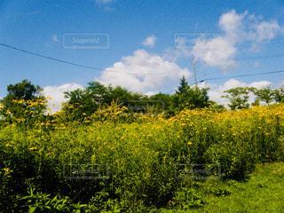 北海道 夕張 幸福の黄色いハンカチ想い出ひろばの写真・画像素材[800931]