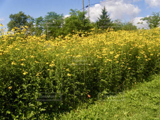 北海道 夕張 幸福の黄色いハンカチ想い出ひろばの写真・画像素材[800933]