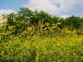 北海道 夕張 幸福の黄色いハンカチ想い出ひろばの写真・画像素材[800936]