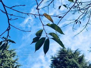 秋の空の写真・画像素材[1864188]