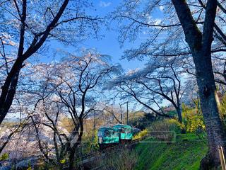 船岡城址公園   桜の写真・画像素材[2021421]