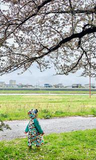 雨の北上展勝地 さんぽの写真・画像素材[2168390]