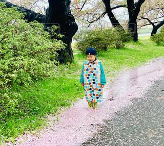 桜の水たまりと子供の写真・画像素材[2168394]
