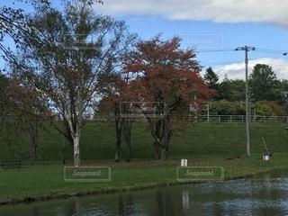 紅葉,木,池,景色
