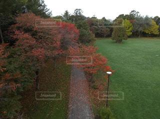 公園,紅葉,屋外,景色,空撮