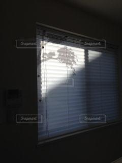 リビング,窓,シルエット,リス,ブラインド