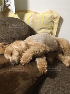 犬の写真・画像素材[509424]