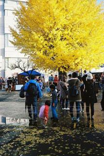 秋の写真・画像素材[599045]