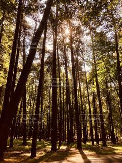 屋外,海外,ヨーロッパ,レトロ,フィルム,森林浴,雰囲気,カラー,植物園,加工,フィルム写真,ベラルーシ,ミンスク,フィルムフォト