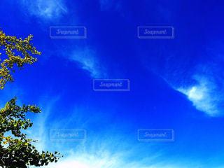 青い空と雲と木の写真・画像素材[1108103]
