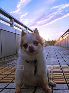 ドックに座っている犬の写真・画像素材[1188633]