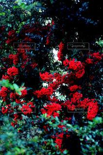 花の写真・画像素材[832148]