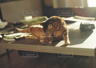 木のテーブルの上に横たわっている猫の写真・画像素材[3238376]
