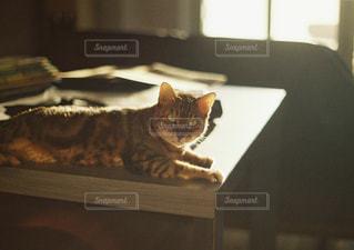テーブルの上に座っている猫の写真・画像素材[3238375]