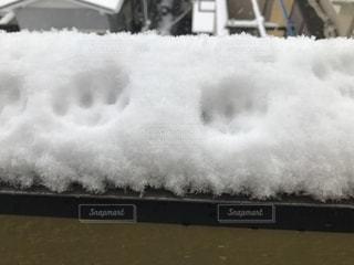 冬,雪,足跡,ホワイト,シロ