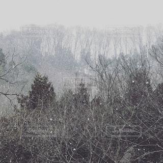 冬,雪,景色,樹木,ホワイト,シロ