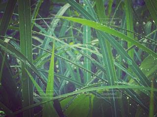 大きな緑の木の写真・画像素材[812920]
