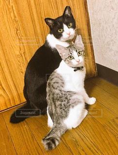 猫の兄弟の写真・画像素材[816292]