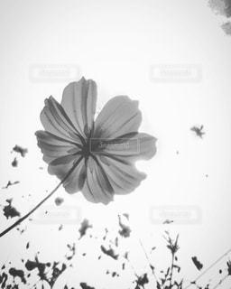 近くの花のアップの写真・画像素材[816740]