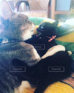 猫,にゃんこ,日常,仲良し,cat,黒猫,兄弟,見つめ合う,喧嘩,フワフワ,ツーショット,凸凹,あっち,こっち,睨み合う