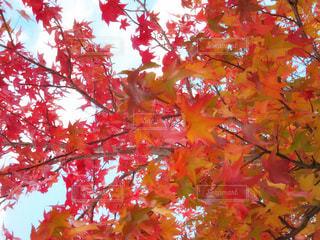 近くの木のアップ - No.844353