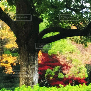 近くの木のアップ - No.871437