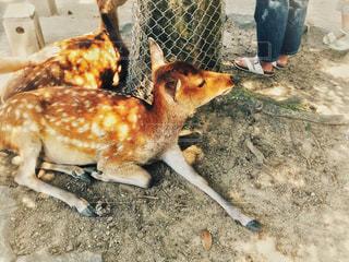 夏,鹿,奈良,奈良公園,熱中症対策