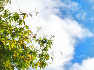 雲フォト♪の写真・画像素材[2411777]