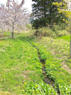 春の写真・画像素材[465162]