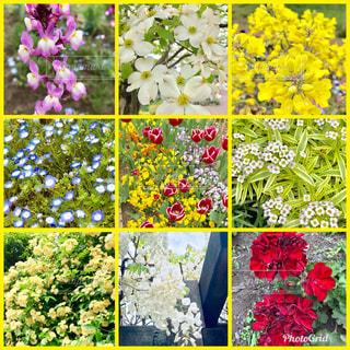 春の花,武蔵野の花,東京都武蔵野市