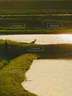 水の体の写真・画像素材[1165866]
