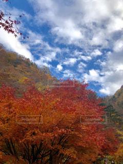 紅葉,秩父,11月,中津峡