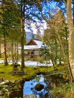 冬,雪,京都,観光地,旅行,三千院,大原