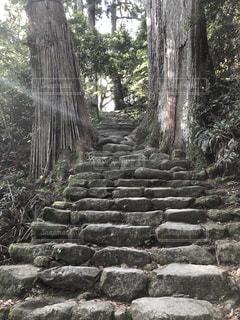熊野古道の写真・画像素材[2150205]