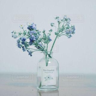 花,カメラ,青,フラワー,ドライフラワー,ガラス,瓶,ブルー,flower,はな