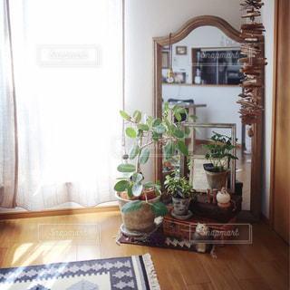 インテリア,植物,観葉植物,ミラー,リサラーソン,ラグ,二人暮らし