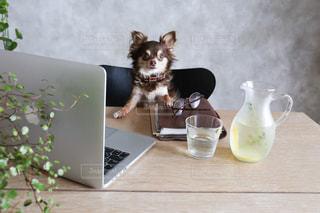 コーヒー カップの横にある机の上に座っている猫の写真・画像素材[1185837]