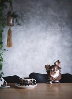コーヒーとわんこの写真・画像素材[2704852]