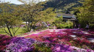 大きな紫色の花は、庭 - No.878940