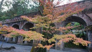 紅葉と水道橋の写真・画像素材[883186]