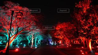 公園,夜景,イルミネーション,休日,徳島,お出かけ