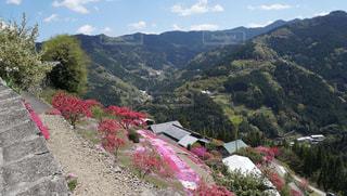 春,カラフル,鮮やか,芝桜,徳島,高開の石積み,美郷