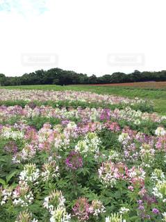 大きな紫色の花は、庭 - No.1140680