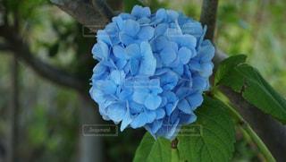 近くの花のアップの写真・画像素材[1397496]