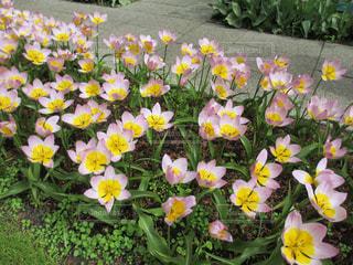 草の中の黄色い花の写真・画像素材[1414678]